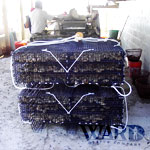 Ward Oyster - Our Aquaculture Oyster Farm - Gloucester Virginia