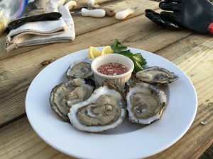 buy oysters & clams from the Ward Oyster Farm - quality seafood